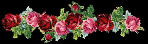 free-digital-vintage-rose-frame-and-border-png-rosenrahmen